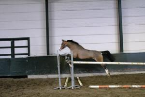 PaardenHandelaren.com