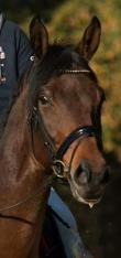 PaardenHandelaren.com - Paardenhandelaren van Nederland overzicht